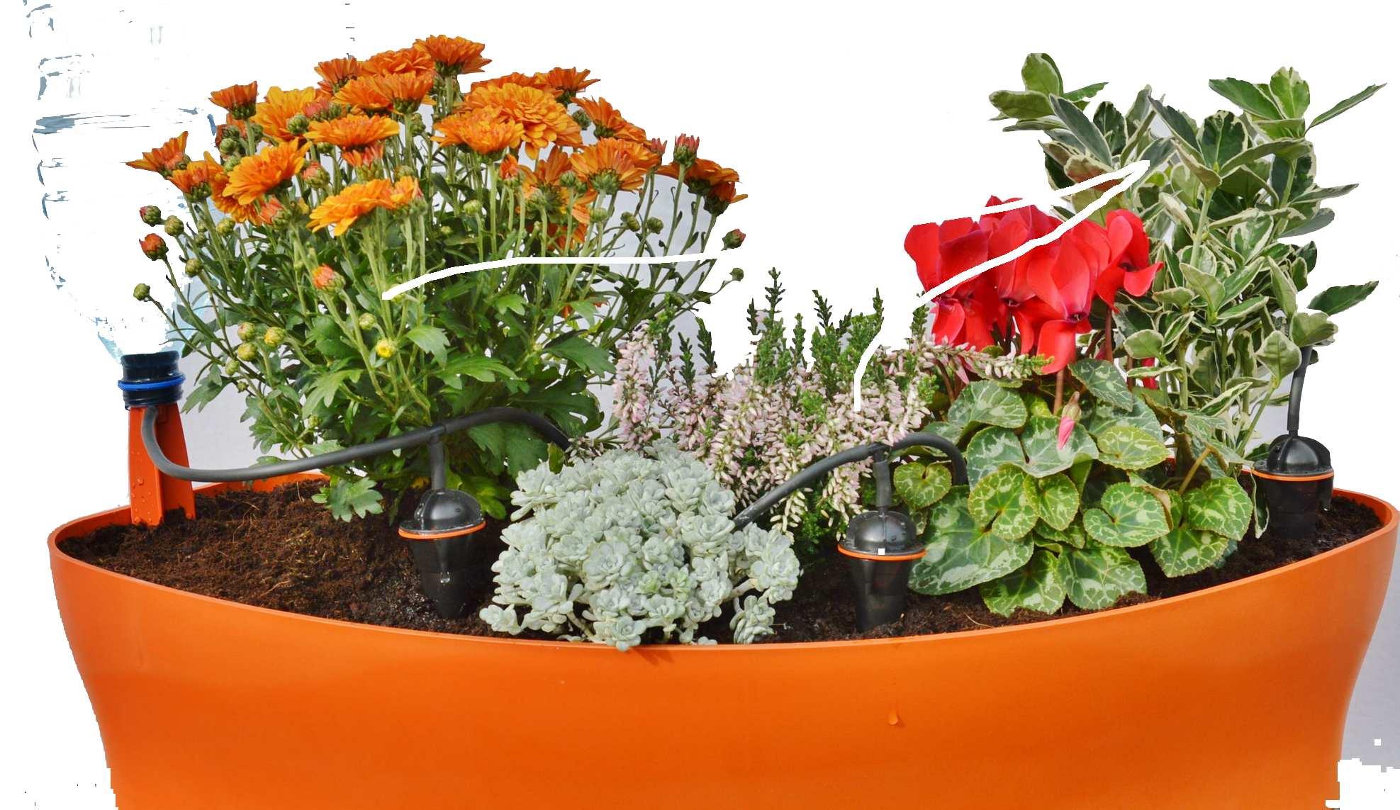 Comment Arroser Jardin Pendant Vacances comment arroser ses plantes pendant les vacances? | iriso