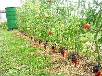 kit-arrosage-jardin